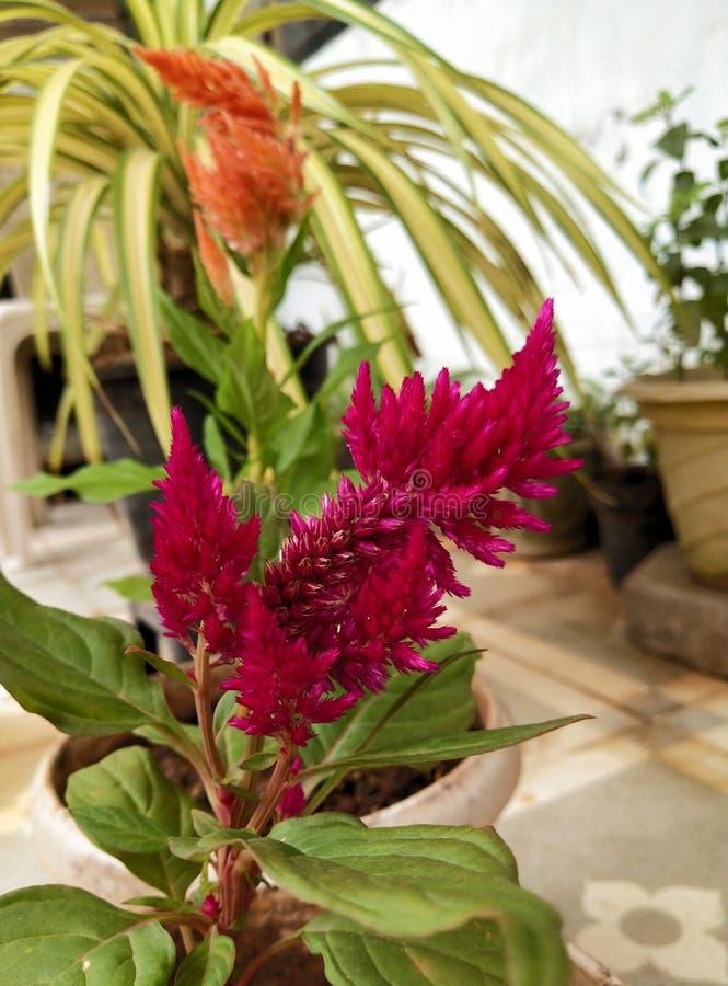 Flores raras indianas fotografia de stock royalty free
