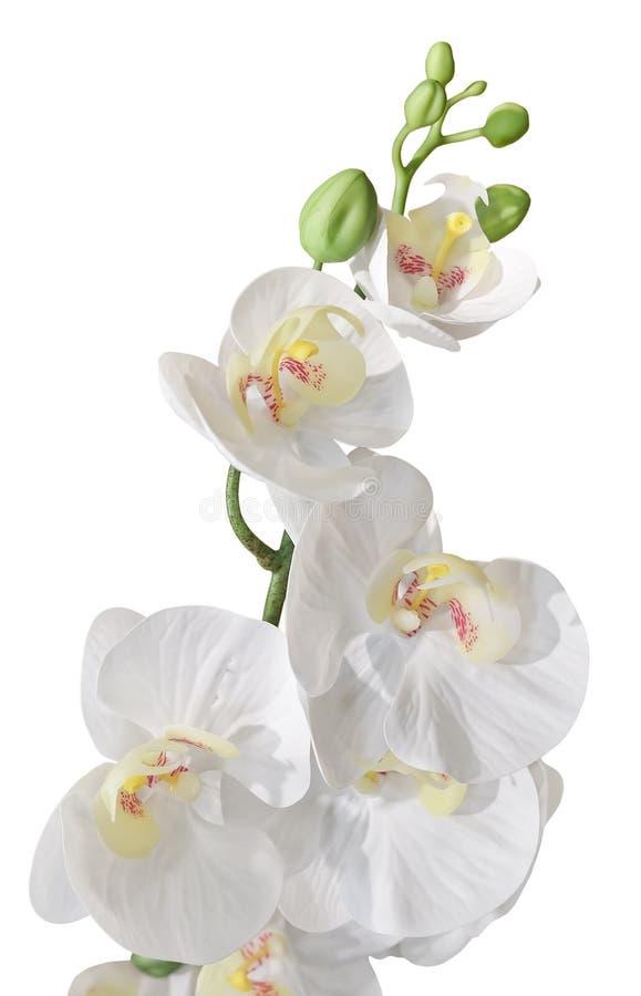Flores rayadas artificiales blancas o Phalaenopsis de la orquídea fotos de archivo libres de regalías