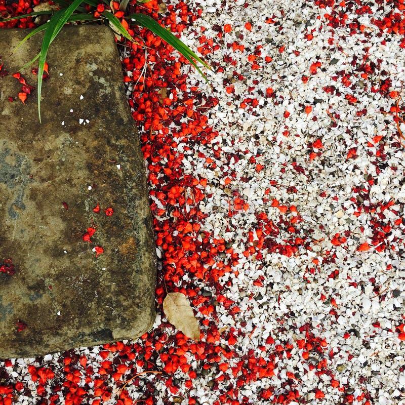 Flores rojas imagenes de archivo