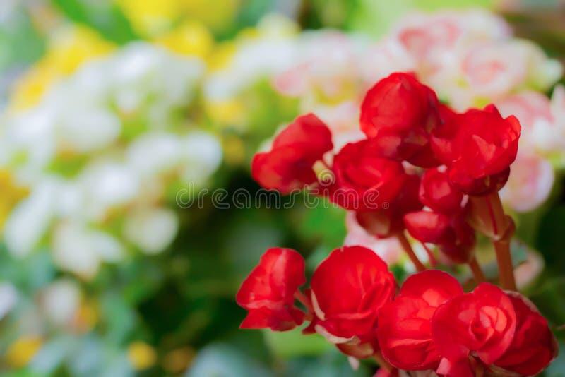 Flores rojas borrosas de la imagen de fondo imagen de archivo