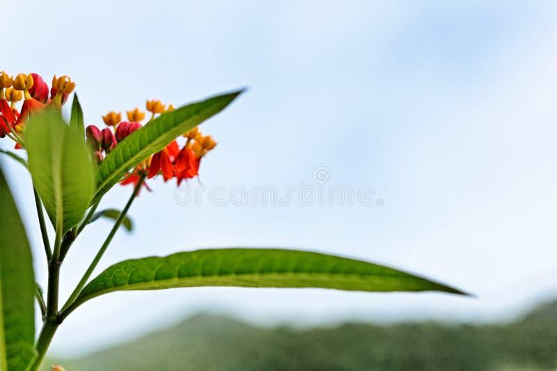 Flores rojas de la hierba en invierno imagen de archivo libre de regalías