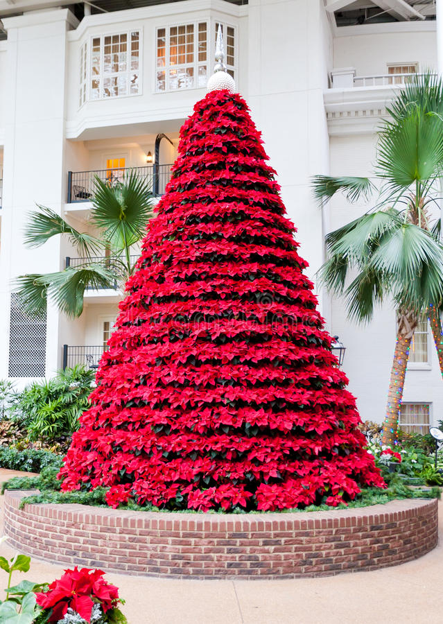 Flores rojas de las poinsetias en forma del árbol de navidad. imágenes de archivo libres de regalías