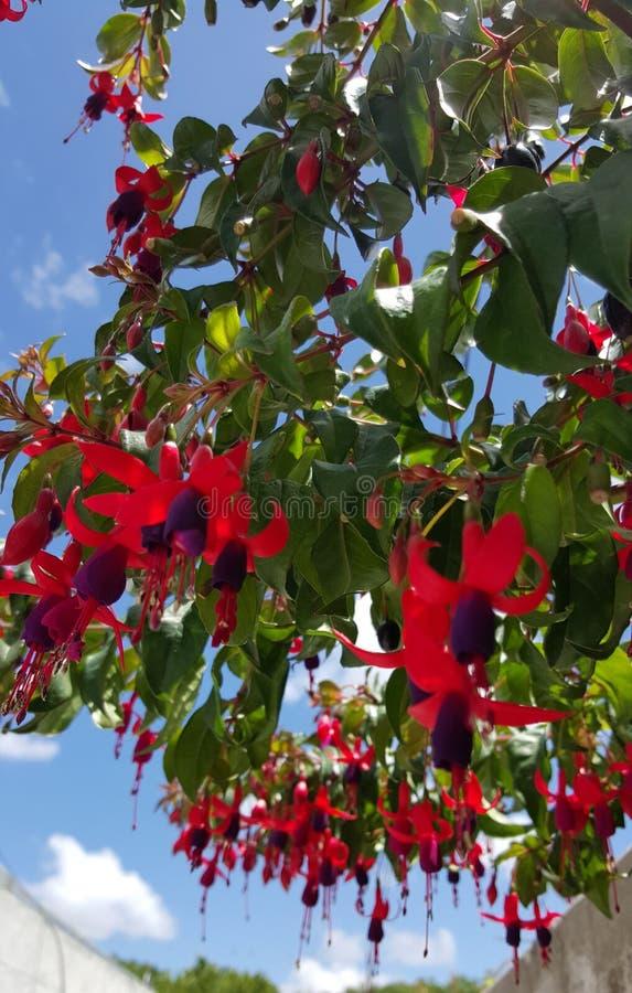 Flores rojas del aljaba imagenes de archivo