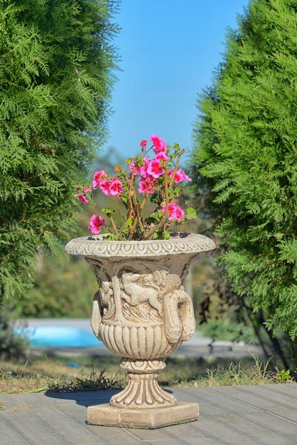 Flores rojas del geranio en pote de cerámica foto de archivo
