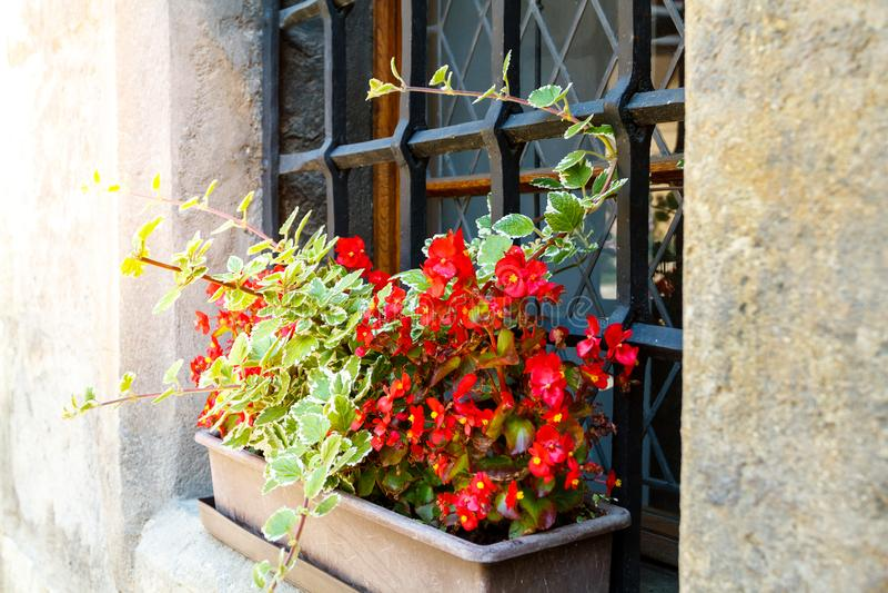 flores rojas en cajas en el alféizar fotografía de archivo libre de regalías