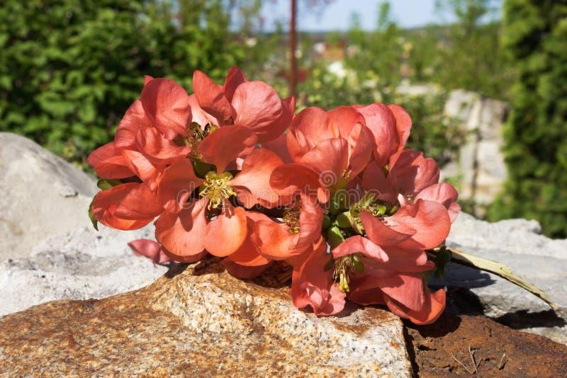 Flores rojas en el fondo del paisaje fotografía de archivo libre de regalías