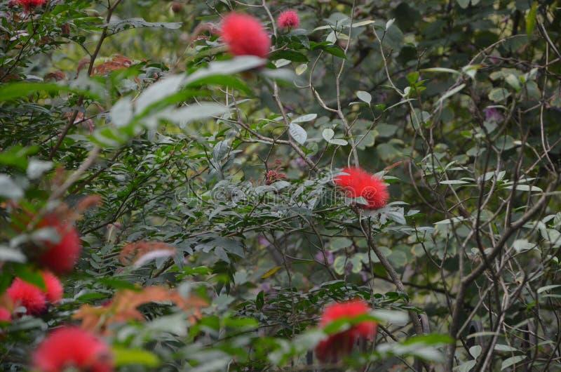 Flores rojas en jard?n fotografía de archivo