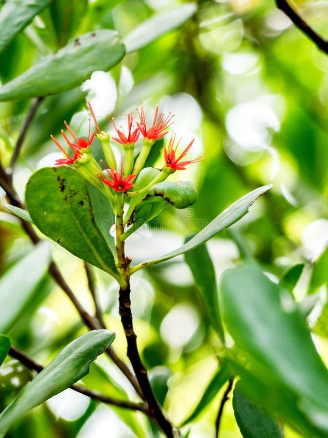 Flores rojas en la selva imagenes de archivo