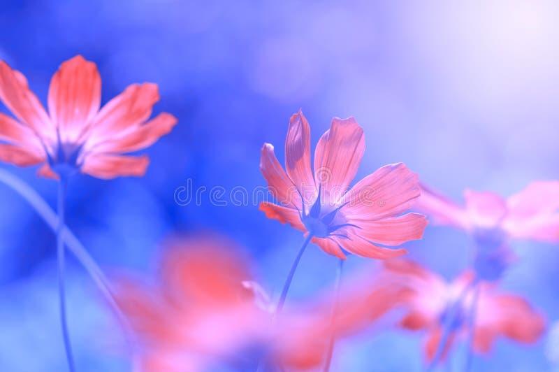 Flores rojas hermosas en un fondo azul borroso Fondo floral natural abstracto Foco suave selectivo Imagen artística fotografía de archivo