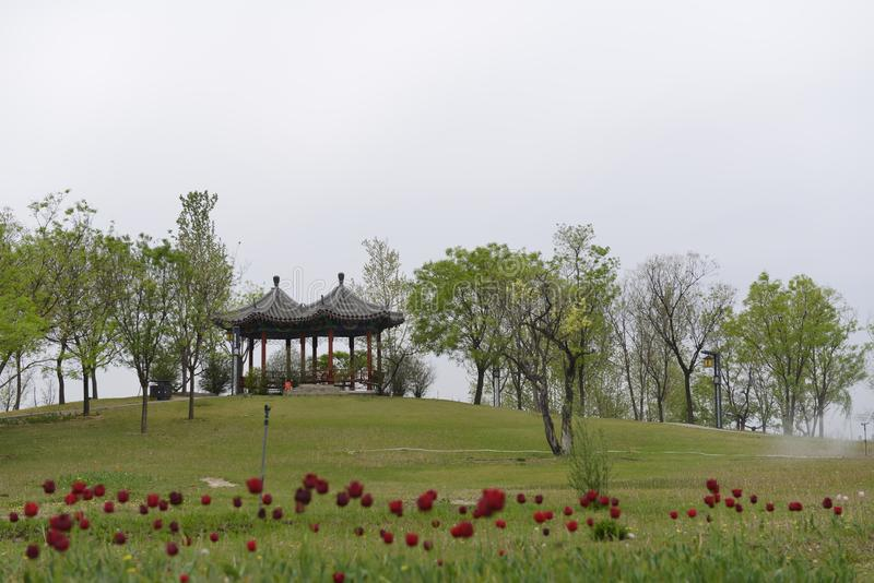 Flores rojas, hierba verde y pabellones imagenes de archivo