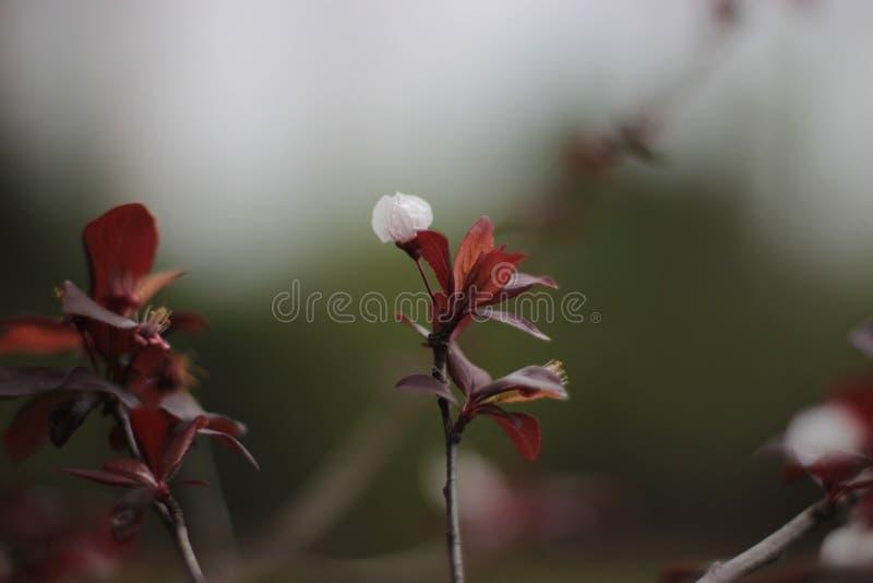 Flores rojizas y blancas y hojas macras imagenes de archivo
