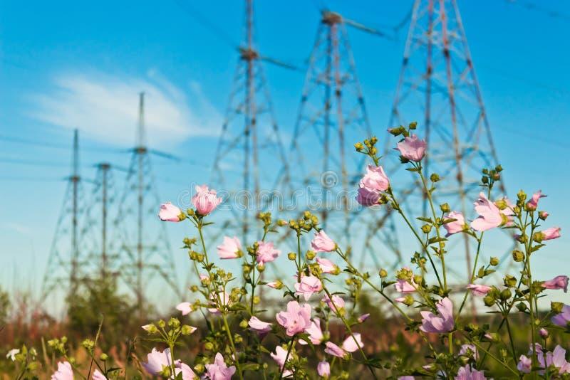 Download Flores rosadas foto de archivo. Imagen de imagen, ambiente - 41921332