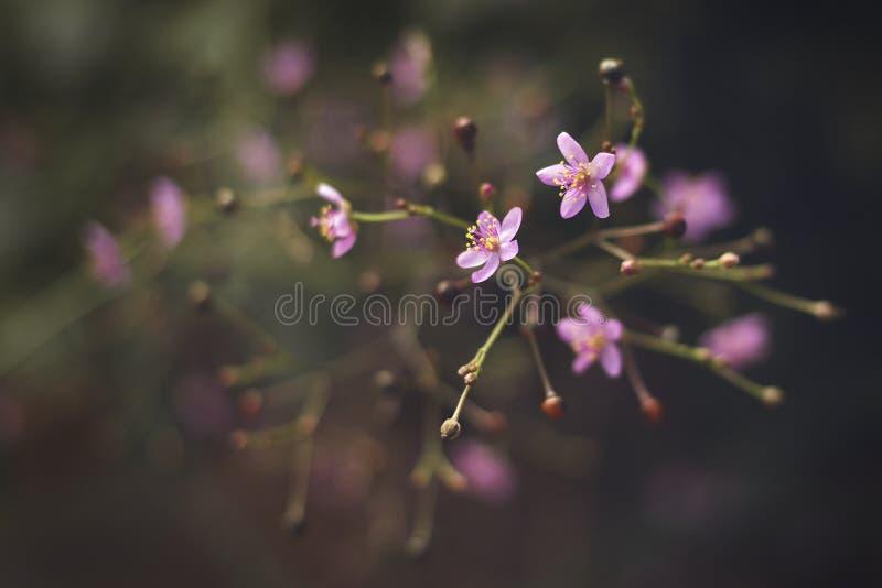 Flores rosadas imágenes de archivo libres de regalías