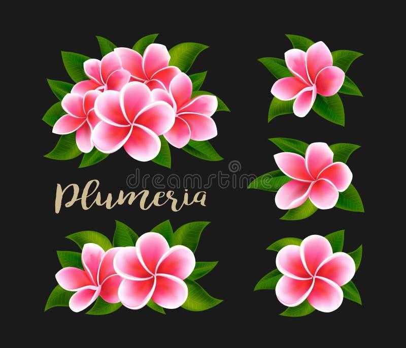 Flores rosadas blancas realistas del frangipani del plumeria con las hojas verdes aisladas foto de archivo