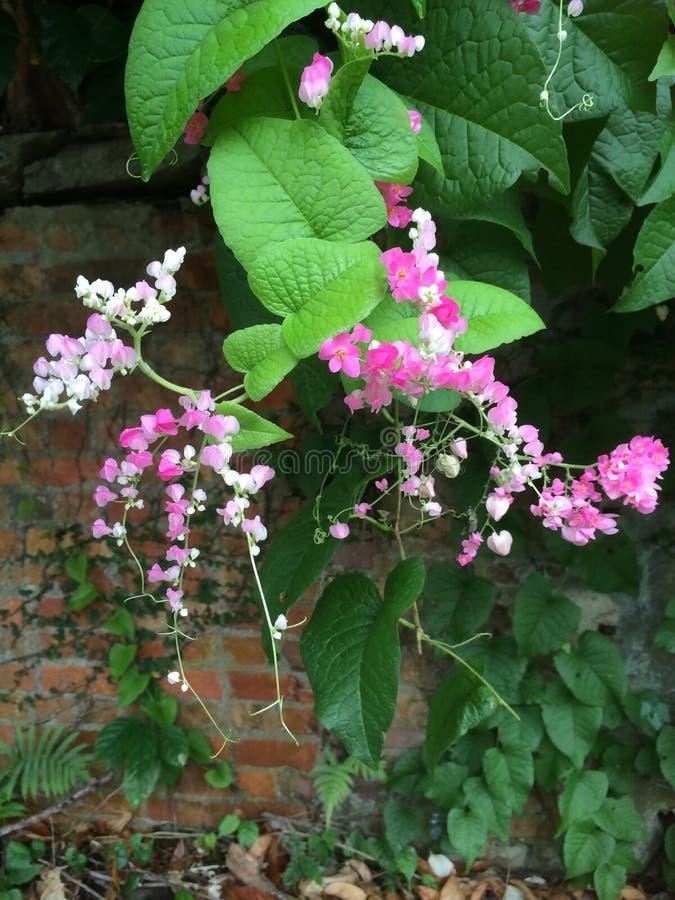 Flores rosadas brillantes fotos de archivo libres de regalías