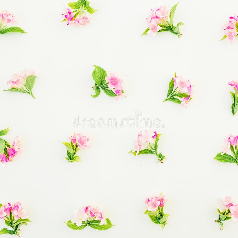 Flores rosadas con las hojas en el fondo blanco Endecha plana, visión superior Composición de la flor stock de ilustración