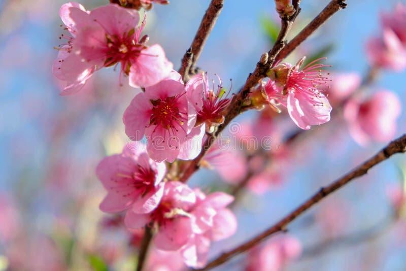 Flores rosadas con las hojas verdes fotos de archivo