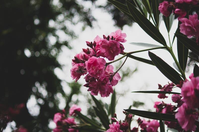 Flores rosadas con un cielo como fondo fotografía de archivo libre de regalías