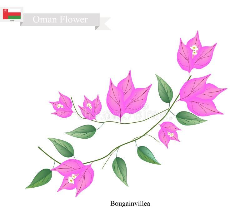 Flores rosadas de la buganvilla, la flor nativa de Omán ilustración del vector