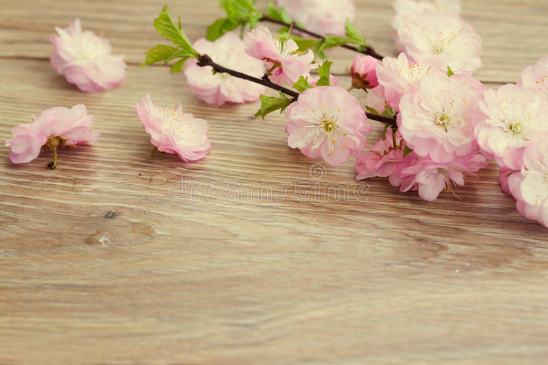 Flores rosadas de la cereza foto de archivo
