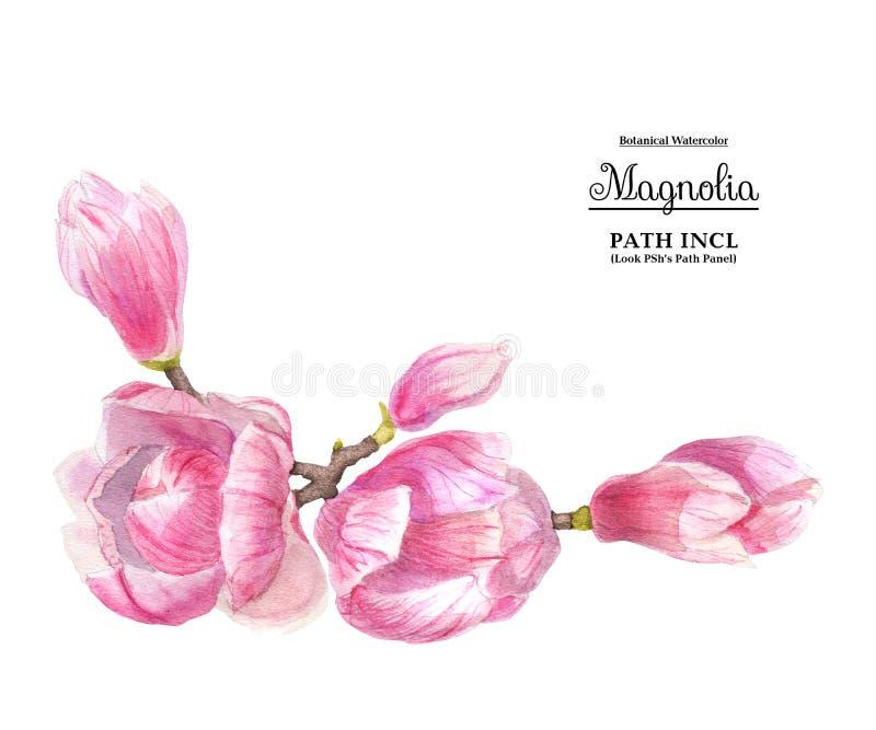 Flores rosadas de la magnolia stock de ilustración