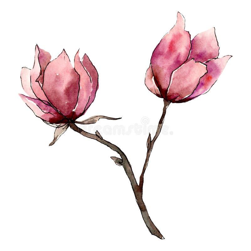 Flores rosadas de la magnolia Elemento aislado del ejemplo del ramo Sistema del ejemplo del fondo de la acuarela stock de ilustración