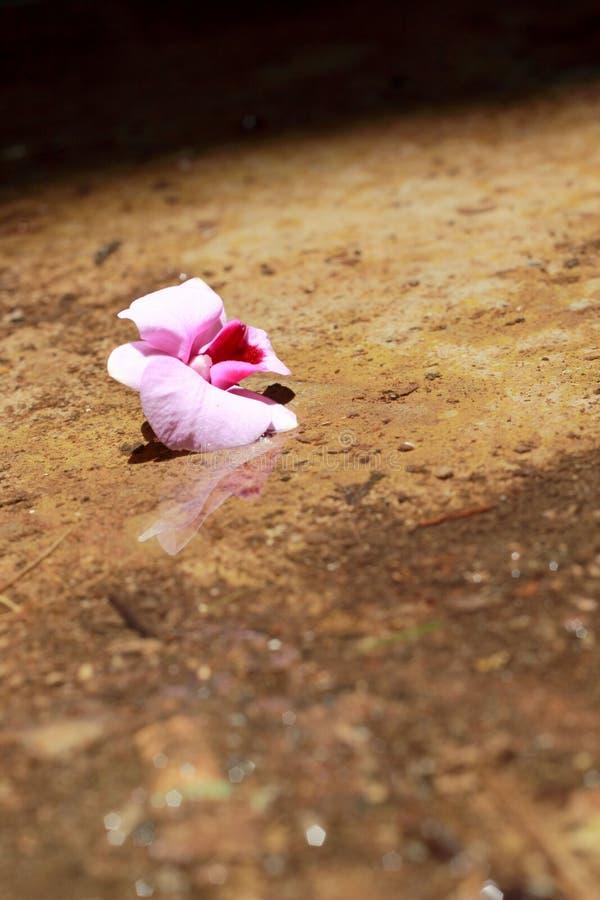 Flores rosadas de la orquídea en la tierra fotografía de archivo