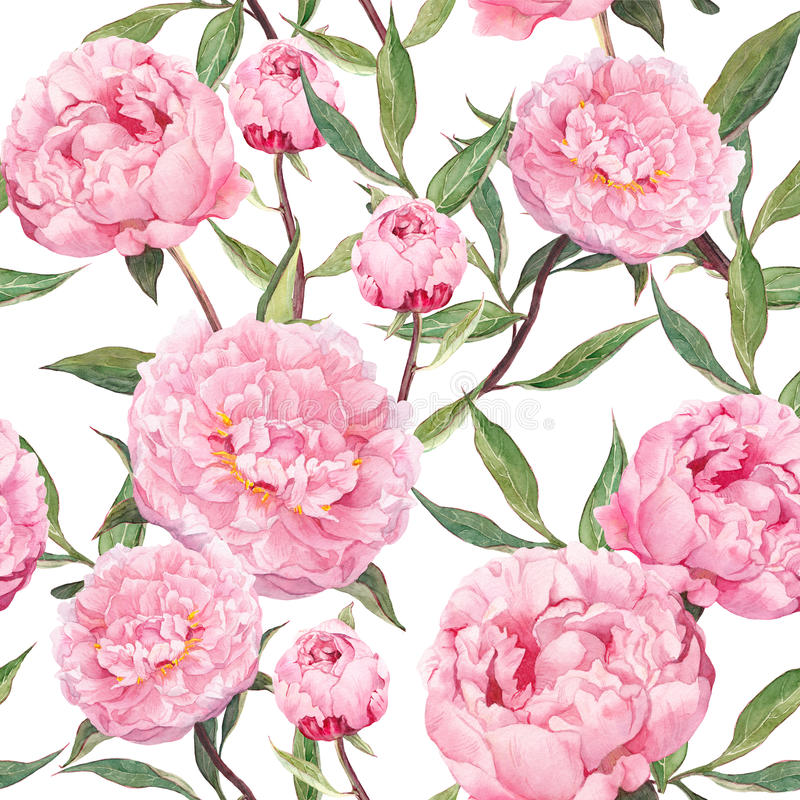 Flores rosadas de la peonía Modelo inconsútil floral watercolor libre illustration