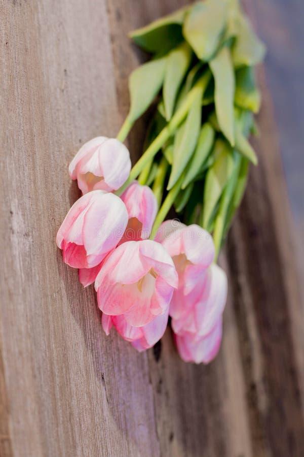 Flores rosadas de la primavera foto de archivo