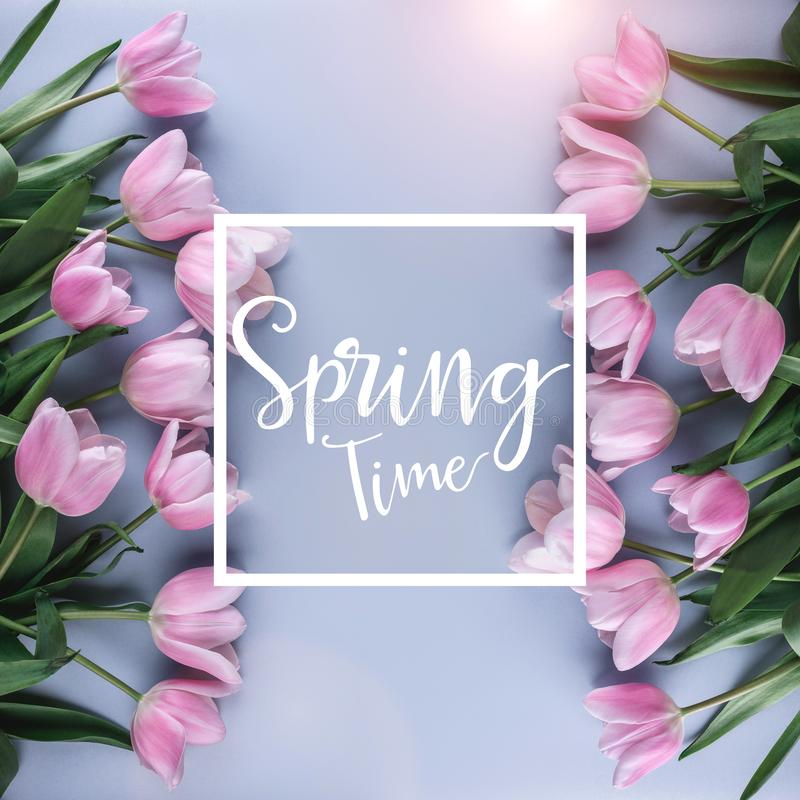 Flores rosadas de los tulipanes en fondo rosado Para primavera que espera Tarjeta por tiempo de primavera Endecha plana, visi?n s libre illustration