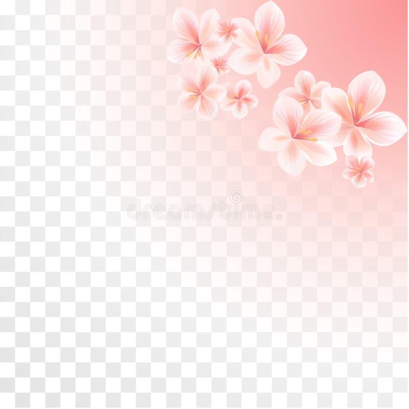 Flores rosadas de Sakura aisladas en fondo transparente de la pendiente Flores de la manzana Cherry Blossoms Vector libre illustration