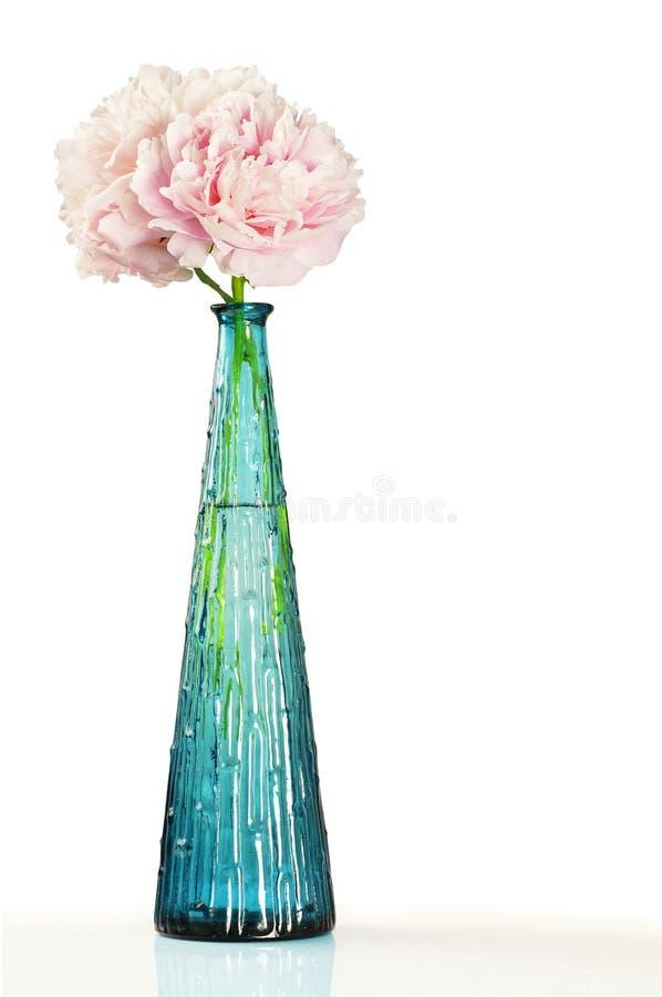Flores Rosadas Del Peony En Florero Azul Sobre Blanco Foto de archivo