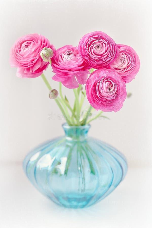 Flores rosadas del ranúnculo foto de archivo libre de regalías