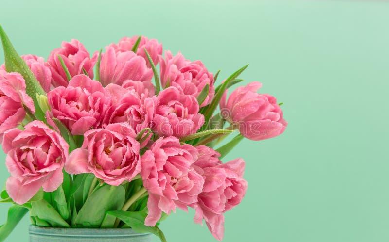 Flores rosadas del tulipán con descensos del agua imagen de archivo libre de regalías