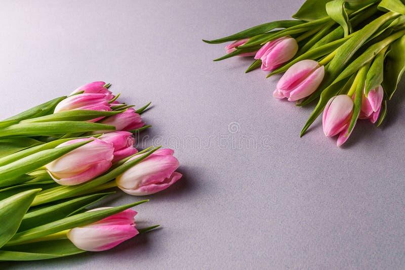 Flores rosadas del tulipán; en fondo gris foto de archivo