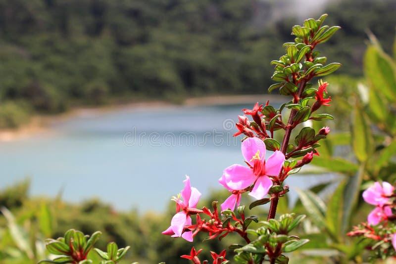 Flores rosadas delante de la laguna foto de archivo