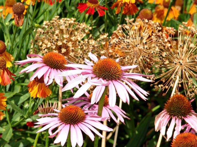 Flores rosadas en jardín colorido fotos de archivo