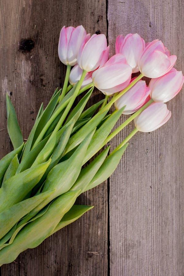 Flores rosadas en la floración foto de archivo libre de regalías