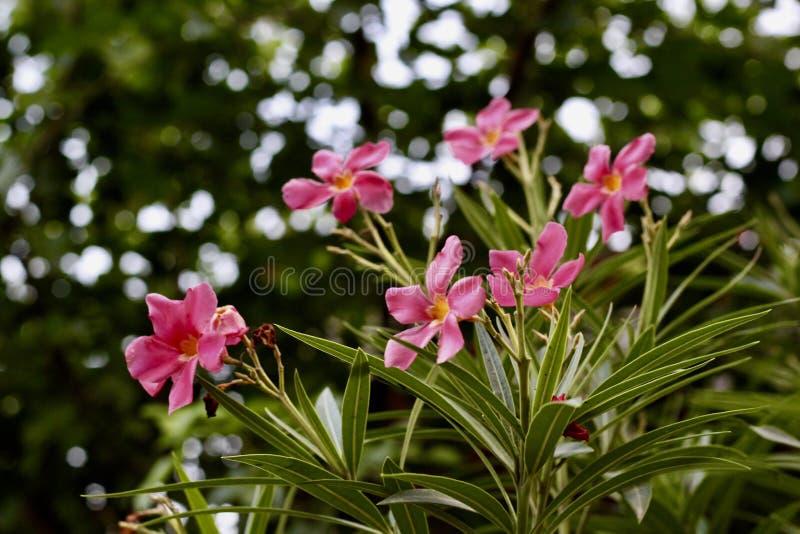 Flores rosadas en los campos fotografía de archivo