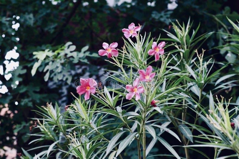 Flores rosadas en los campos imagenes de archivo
