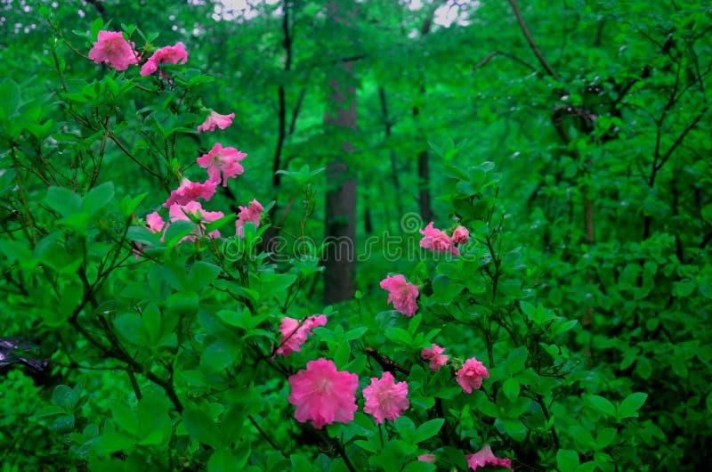 Flores rosadas hermosas con un color vibrante foto de archivo libre de regalías