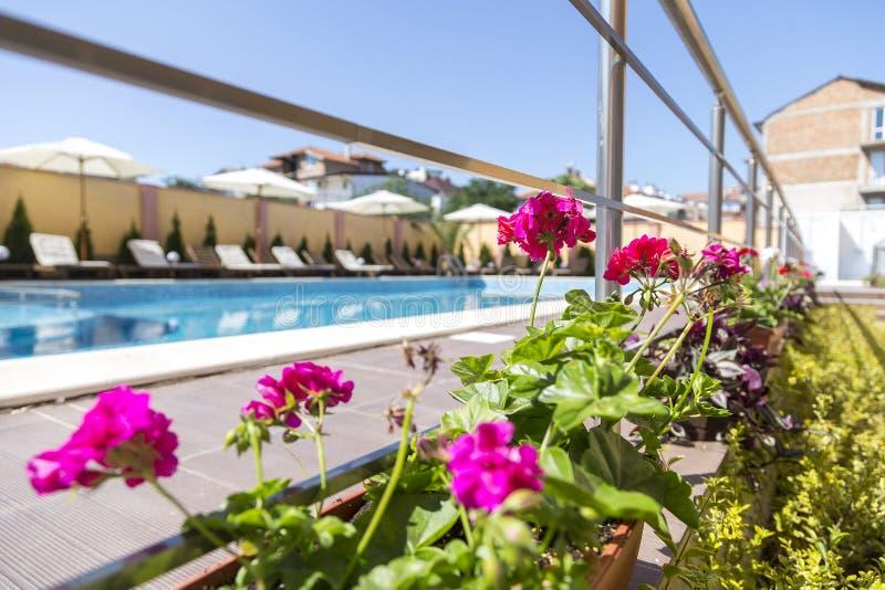 Flores rosadas hermosas contra la perspectiva de una piscina grande en la altura del verano complejo del hotel en una ciudad de l foto de archivo