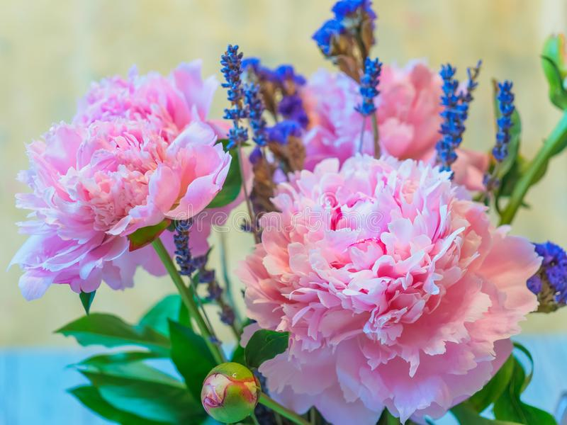 Flores rosadas hermosas de la peonía y de la lavanda contra fondo borroso imagen de archivo libre de regalías