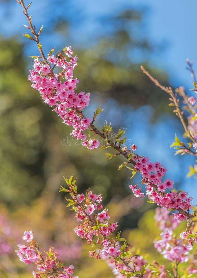 Flores rosadas hermosas, tarjeta del día de San Valentín foto de archivo libre de regalías