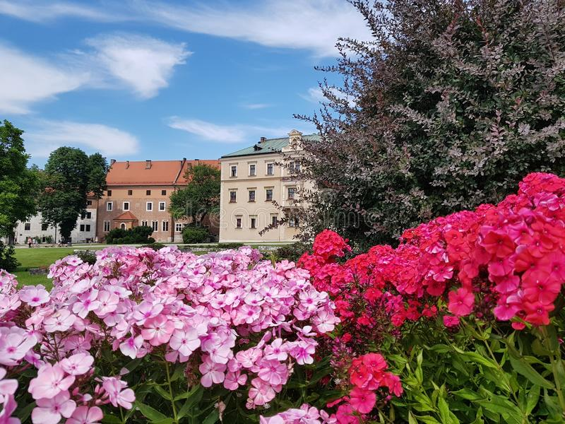 Flores rosadas Jardín de flores en el castillo de Wawel en Kraków imágenes de archivo libres de regalías