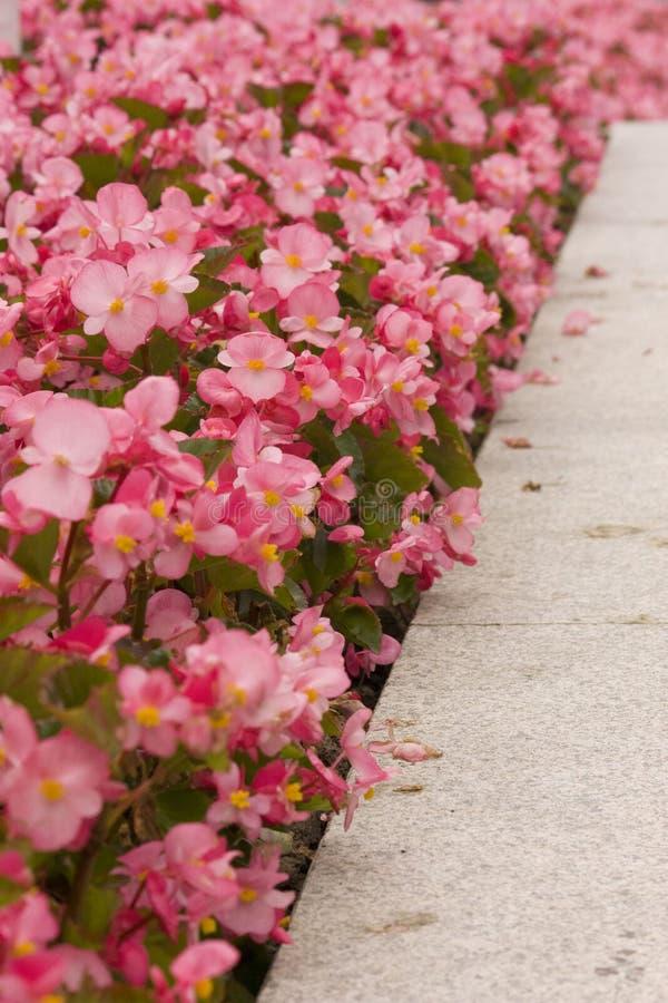 Flores rosadas, material de la cama de flor fotografía de archivo