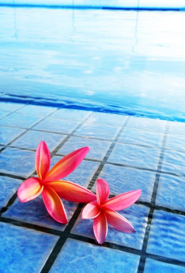 Flores rosadas por la piscina azul fotografía de archivo libre de regalías