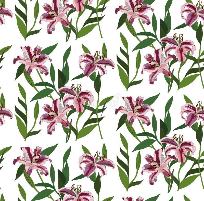 Flores rosadas rojas florales herbarias de los lirios del verano brillante precioso maravilloso de la primavera con vector verde  ilustración del vector