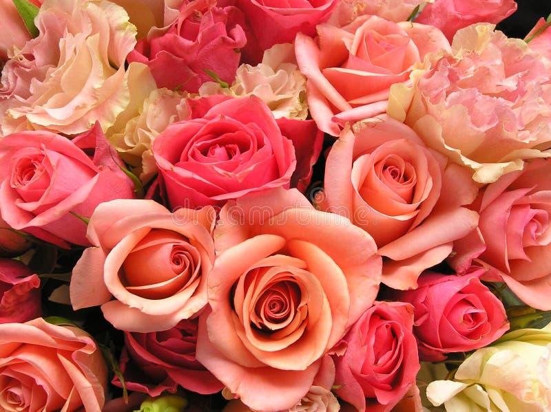 Flores rosadas románticas fotos de archivo libres de regalías