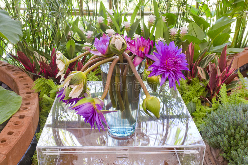 Flores rosadas y púrpuras de Floristry de loto en el florero de cristal foto de archivo libre de regalías